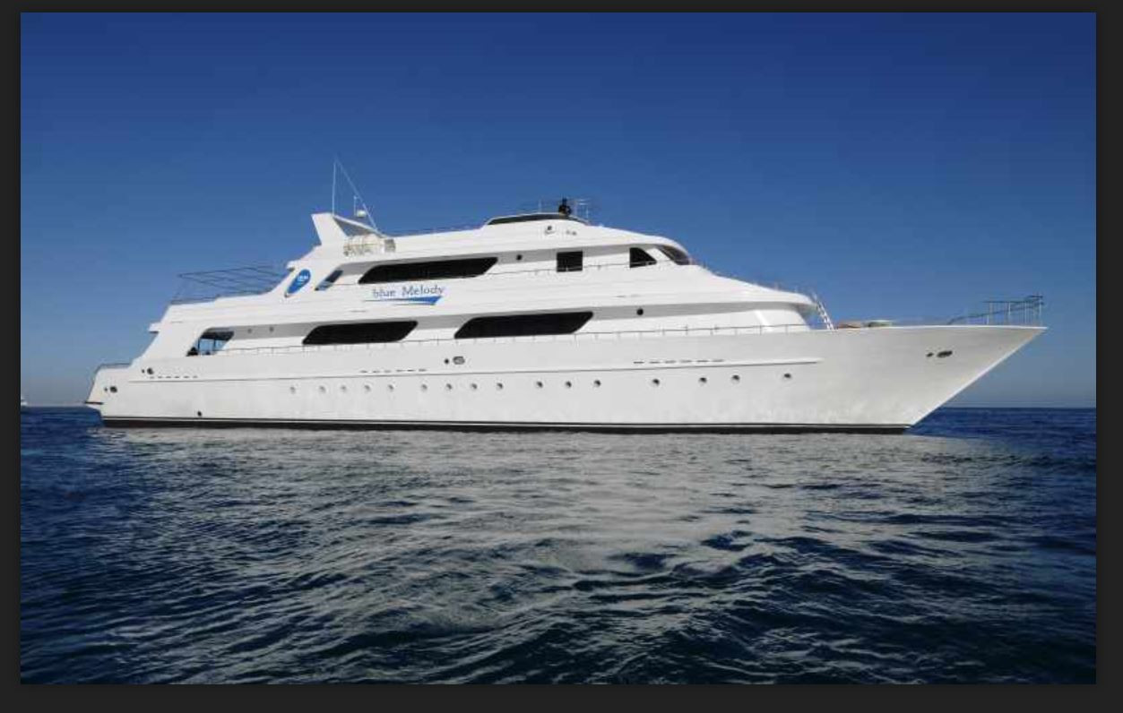 Red Sea Diving Specials on the M/Y Blue Melody